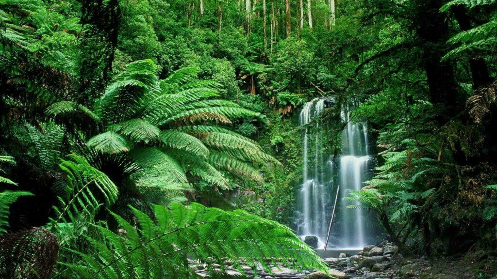 Индийские джунгли