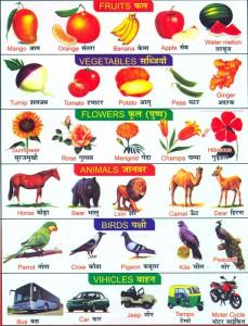 Фрукты, овощи, животные, птицы, транспорт